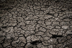 Dried land background Stock Photography