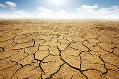 Dried land with cracked ground Royalty Free Stock Photos