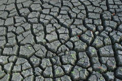 Dried land, dead earth, cracks Royalty Free Stock Images