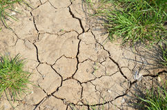 Dried land and grass Royalty Free Stock Photos