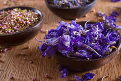 Dried larkspur petals Stock Photo