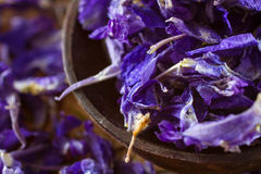 Dried larkspur petals Stock Images