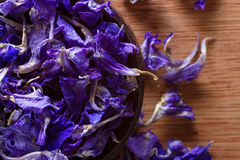 Dried larkspur petals Royalty Free Stock Images