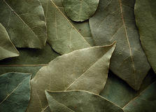 Dried laurel leaf background Royalty Free Stock Photos