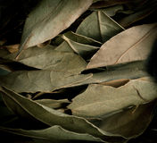 Dried laurel leaf horizontal background Stock Photos