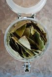 Dried laurel leaves. Stock Photography