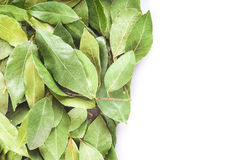 Dried laurel leaves on a white background Stock Photography