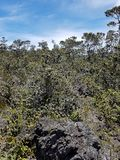 Dried Lava and New Vegetation Growth on a Partly Cloudy Day Stock Photo