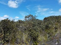 Dried Lava and New Vegetation Growth on a Partly Cloudy Day Stock Photography