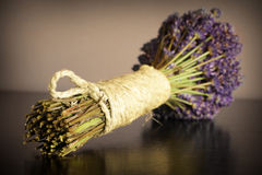 Dried lavander Stock Photography