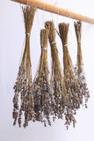 Dried Lavender Stock Photos