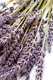 Dried lavender Royalty Free Stock Photos