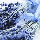 Dried lavender Royalty Free Stock Photography