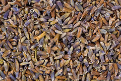 Dried Lavender royalty free stock images