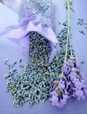 Dried lavender in bag and fresh flowers. Close up royalty free stock photos