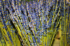 Dried lavender in basket. Dried lavender in a basket Royalty Free Stock Images