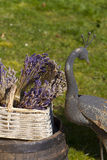 Dried lavender in a basket Stock Photo