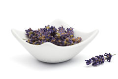 Dried lavender blossoms Stock Images