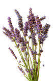 Dried lavender bouquet Royalty Free Stock Photo
