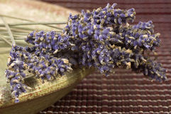 Dried lavender bunch. Countryside aromatherapy. herbalism Royalty Free Stock Images