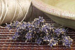 Dried lavender bunch Royalty Free Stock Image