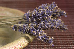 Dried lavender bunch Stock Photo