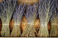 Dried lavender bunches. Bunches of dried lavender flowers for sale in Provence, France Royalty Free Stock Photography