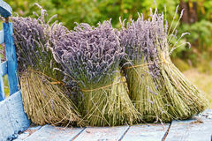Dried lavender bunches Stock Photo
