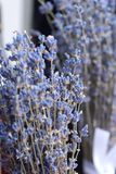 Dried lavender in bundles Stock Photos