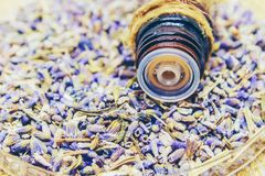 Dried lavender, essential oil. Royalty Free Stock Photography