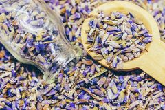 Dried lavender, essential oil. Stock Photo