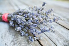 Dried Lavender Flower Aromatic Plant. Dried lavender flower over wooden rustic background on daylight, bunch of aromatic plant royalty free stock photography