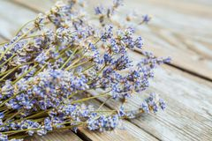 Dried Lavender Flower Aromatic Plant. Dried lavender flower over wooden rustic background on daylight, bunch of aromatic plant royalty free stock photo