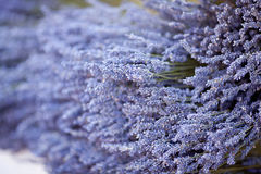 Dried lavender flowers Stock Image