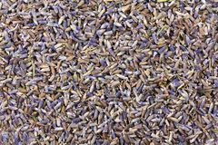 Dried Lavender flowers Stock Photo