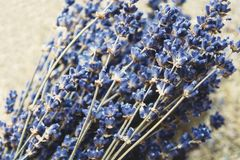 dried lavender flowers and bouquet with lavender stock photography