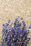 dried lavender flowers and bouquet with lavender stock image