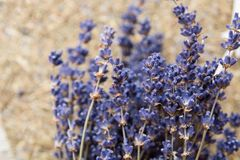 dried lavender flowers and bouquet with lavender stock photos