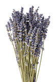Dried lavender flowers Stock Images