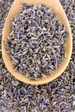 Dried Lavender flowers Stock Photos
