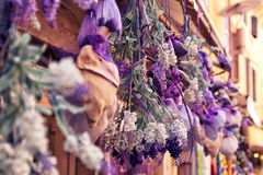 Dried lavender hanging. Beautiful color of dried lavender hanging Stock Photo