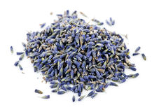 Dried lavender herb flowers Stock Photos