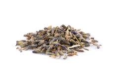 Dried lavender organic tea Royalty Free Stock Photos