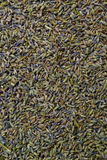 Dried Lavender Petals. Royalty Free Stock Photos
