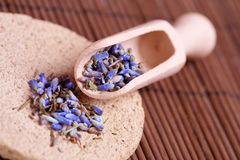 Dried lavender petals on the wooden spoon Stock Photography