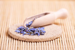 Dried lavender petals on the wooden spoon Stock Photos