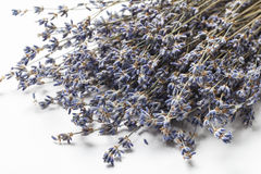 Dried Lavender Seeds Stock Photos