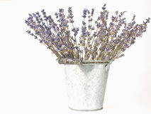 Dried lavender sprigs Royalty Free Stock Image