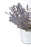 Dried lavender sprigs Stock Image