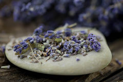 Dried Lavender - Stock Photo Royalty Free Stock Photos